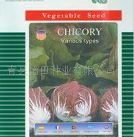 种籽公司批发蔬菜种籽 进口种籽 结球红菊苣种子 及各种蔬菜种子