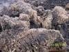 供应泥炭:泥炭高含有基质、富含黄腐植酸