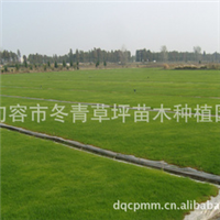 低价供应大量优质无土高羊茅草坪