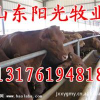 内蒙古通辽买牛去哪里通辽哪里的牛便宜通辽肉牛价格