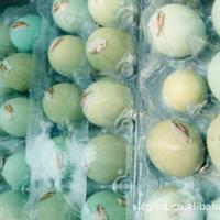 厂家直销绿壳鸡蛋  专业生产