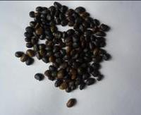 (当年新产) 国槐种子  特供
