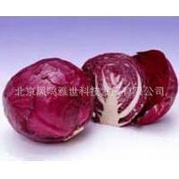 紫甘蓝 种子 30粒/元 产量高、结球紧实、耐贮藏,营养丰富