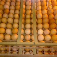 供应大量种蛋