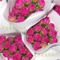 供应金朵园花卉康乃馨百合玫瑰非洲菊鲜花批发
