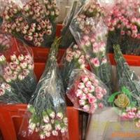 供应云南花卉昆明市玫瑰 百合 康乃馨 鲜花批发 鲜切花 花卉批发
