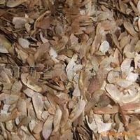 红枫种子,美国品种,175一斤
