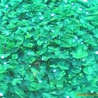 供应河北辽宁山东江苏上海浙江四川吉林草莓苗