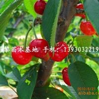 供应北京大樱桃苗,葡萄苗,桃树苗,苹果苗