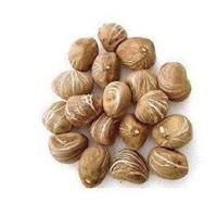 发财树种子别名瓜栗、中美木棉 一斤30元一粒0.3元 翁15814961498
