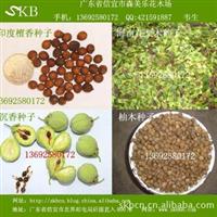 供应檀香种子,花梨木种子,沉香种子,柚木种子(图)