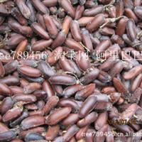 腊梅花种子 2012年腊梅种子发芽率高 盆栽花卉种植 庭院植物种子