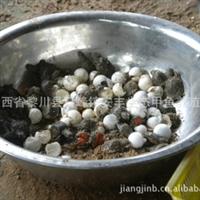 【1.5元特卖】福建甲鱼苗|福建中华鳖苗(3克以上/只)