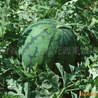供应优质桃花源西瓜