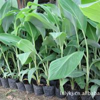 园林绿化苗、荒地补绿苗