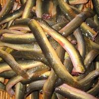泥鳅,黄泥鳅,青鳅,青泥鳅
