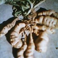 供应生地种根