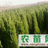 供:紫穗槐、北海道黄杨、红叶小檗、蜀桧、洒金柏、金叶女贞等