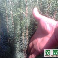 电话15944551346.吉林省柳河县。安口镇