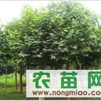 1-20公分造型苗木