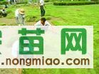 低价供应马尼拉草坪,价优,一天发货电话13775528172