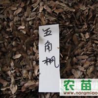 青枫种子、五角枫种子、石楠种子