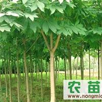 陕西周至吕家堡供应1-10cm七叶树