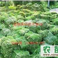 第一家草皮基地=贵州草皮价格