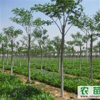 供应合欢、白腊、榆叶梅、西府海棠、木槿