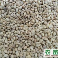 安徽供应:枳壳(大叶)种子