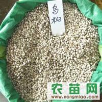 合欢种子、乌桕种子、杜仲种子、苦楝种子、白腊种子、银杏种子