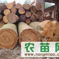优质越南缅甸金丝楠木--直径30-80CM以上