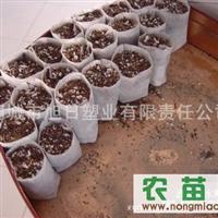 大量供应无纺布育苗容器、快速装土蜂窝状育苗袋