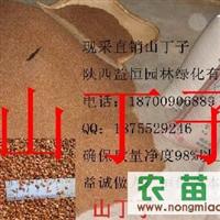 山丁子 海棠 苹果砧木种子出售电话:18700906889