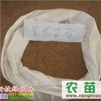 厂价直销进口草籽 紫花苜蓿种子 紫花苜蓿种子价格 量大优惠