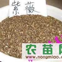 出售油杉种子、红枫种子、紫薇种子、紫荆种子、紫白玉兰种子等