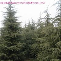 雪松,华山松,金钱松,马尾松树,黑松油松