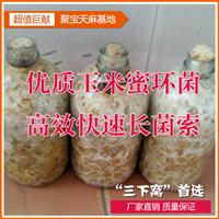 供应优质玉米蜜环菌,三下窝首选