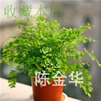 甲醛克星净化高手好养绿植盆栽铁线蕨室内花卉可水培