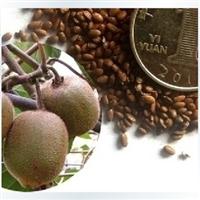 猕猴桃种子批发果树种子奇异果苗水果种子猕猴桃种苗品种多