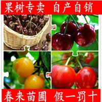 果树苗樱桃苗樱桃树苗嫁接大苗车厘子树苗多个品种