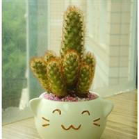 盆栽植物仙人指仙人类植物桌面植物防辐射迷你盆