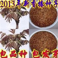 新香椿种子发芽率超高芽菜用红油香椿种子脱翅净籽包发芽包品种