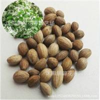 批发嫁接桂花的流苏种子油根子种子流苏树种子油根种子一斤
