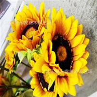 供应观赏向日葵种子多头盆栽多头向日葵种子复瓣多头观赏葵花