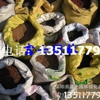 供应台湾青草、早熟禾黑麦草种子狗牙根种子