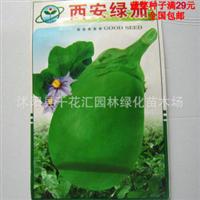 蔬菜种子绿茄子种子西安绿罐茄家庭装约100粒