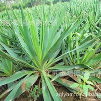 公司【红叶小檗种子】其他绿化苗木种子等批发