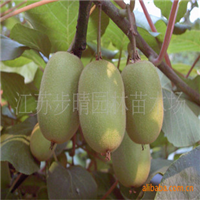 出售【猕猴桃种子】猕猴桃小苗葡萄苗等各种果树苗批发
