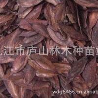 供应杜仲种子_药材种子_林木种子_园林绿化种子